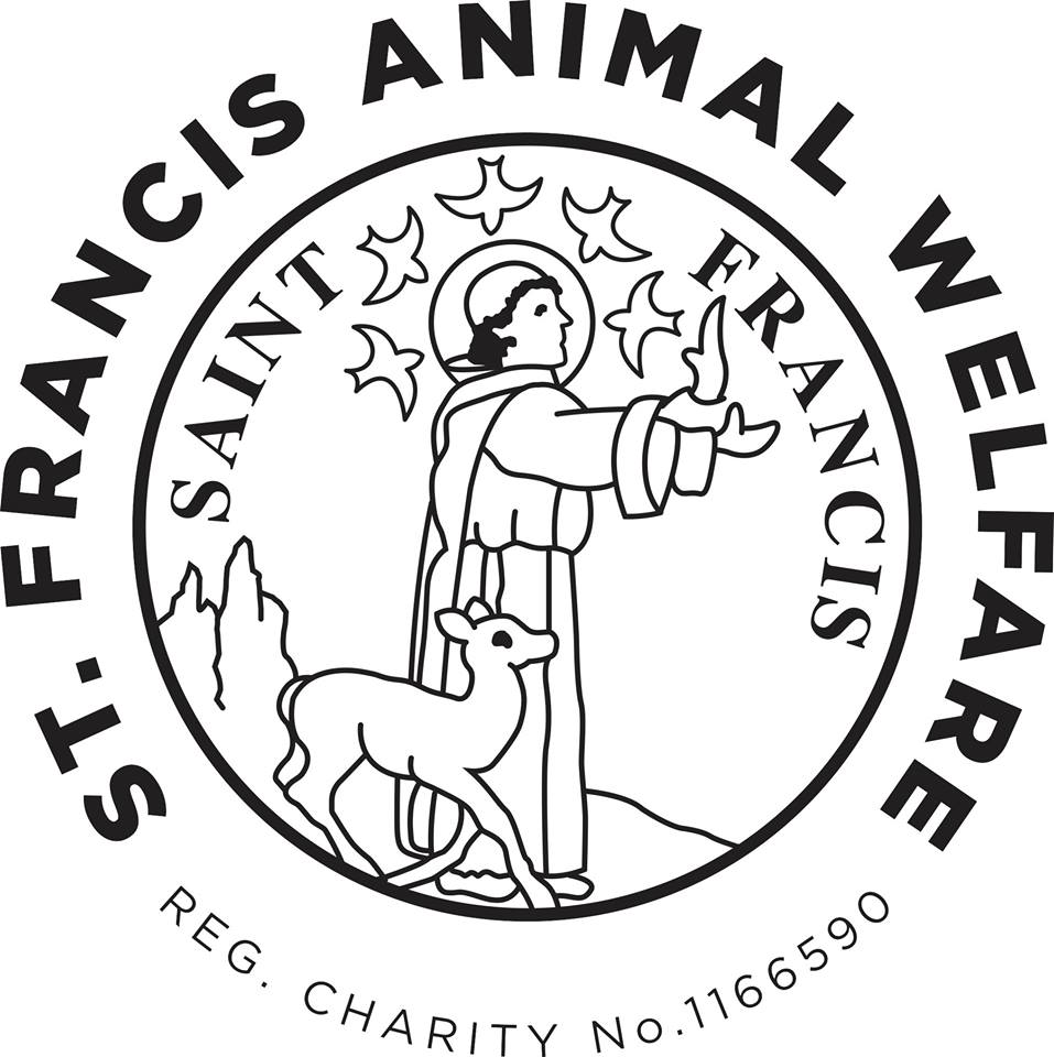 Image of: Sad Lucky Dog Resorts Home St Francis Animal Welfare