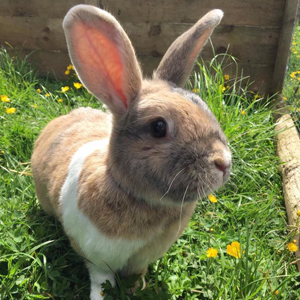 adoption-rabbit-2