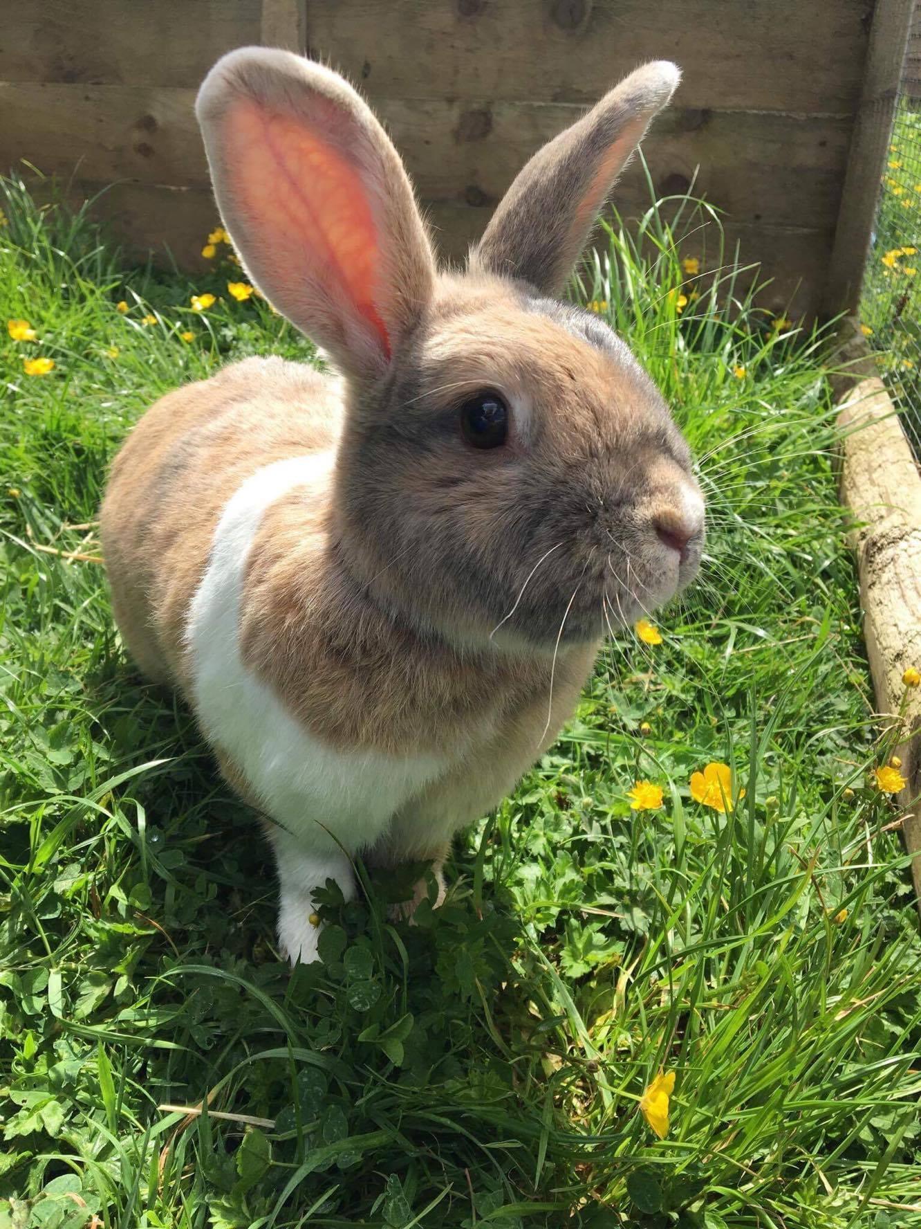 Home | St Francis Animal Welfare